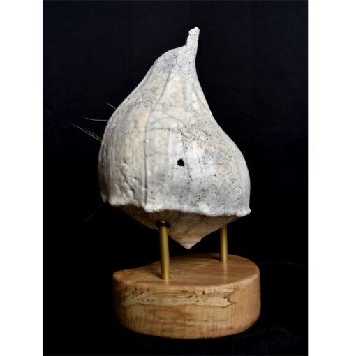 seashell-living-sculpture